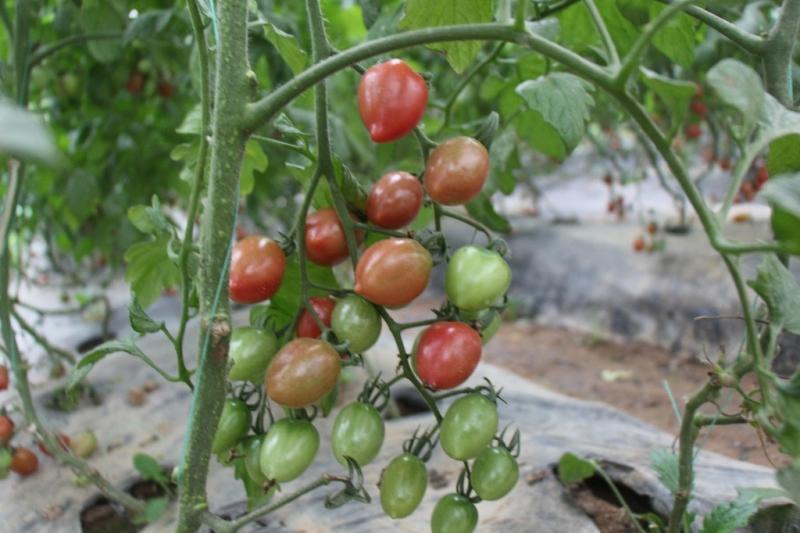 有机果蔬采摘基地