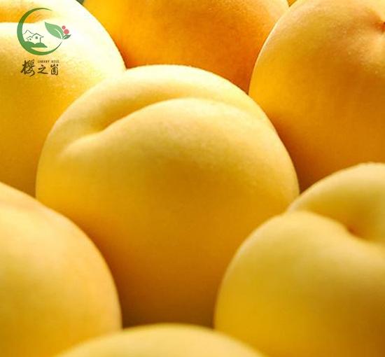 黄桃产业园